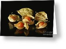 A Taste Of Columbia Physalis Aztec Golden Goose Berry Greeting Card by Inspired Nature Photography By Shelley Myke
