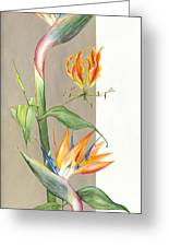 Bird Of Paradise 09 Elena Yakubovich Greeting Card by Elena Yakubovich