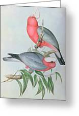 Birds Of Asia Greeting Card by John Gould