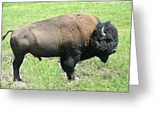 Bison Greeting Card by Larry Stolle