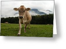Cow In Switzerland Greeting Card by Gynt