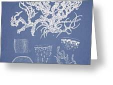 Eucheuma Spinosum Greeting Card by Aged Pixel