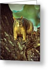 Fox Squirrel Greeting Card by Robert Bales