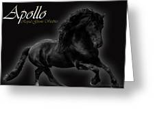 Friesian Stallion Greeting Card by Royal Grove Fine Art