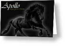 Friesian Stallion Greeting Card by Royal Grove Fine Art