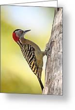 Hispaniolan Woodpecker Greeting Card by Jim Nelson