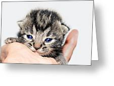 Kitten In A Hand Greeting Card by Susan Leggett