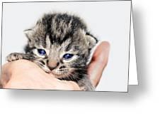 Kitten in a Hand Greeting Card by Susan Leggett