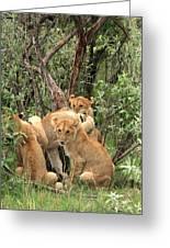 Masai Mara Lion Cubs Greeting Card by Aidan Moran