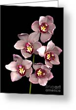 Pink Orchid Greeting Card by Jacqui Martin