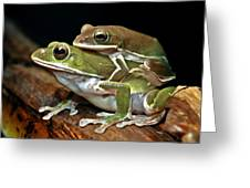 Tree Frog Greeting Card by Lanjee Chee