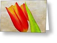 Tulip Art Greeting Card by Darren Fisher