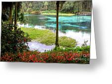 Winter In Florida Greeting Card by Richard Burr