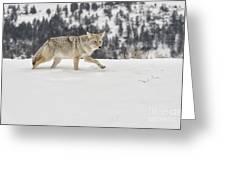 Winter's Determination Greeting Card by Sandra Bronstein