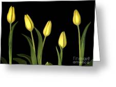 Yellow Tulips Greeting Card by Jacqui Martin