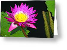 00189 Greeting Card by Marty Koch