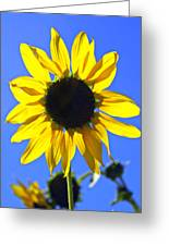 072 Greeting Card by Marty Koch