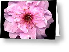 Cherry Blossom Greeting Card by Jacqui Martin