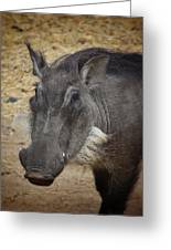 African Boar Greeting Card by Dave Hall