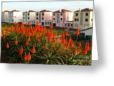 Aloe Flowers Greeting Card by Gaspar Avila