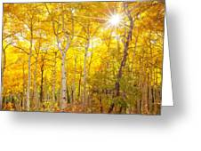 Aspen Morning Greeting Card by Darren  White