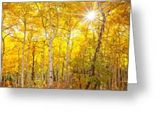 Aspen Morning Greeting Card by Darren  White