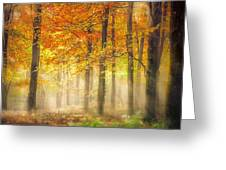 Autumn Gold Greeting Card by Ian Hufton