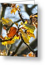 Autumn Leaves Greeting Card by Design Windmill