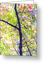 Autumn Leaves Greeting Card by Scott Cameron