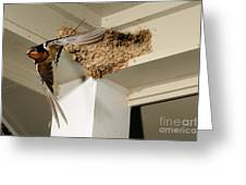 Barn Swallow Greeting Card by Scott Linstead