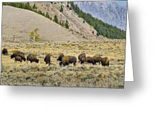 Bison Grazing Beneath The Tetons Greeting Card by Robert Carney