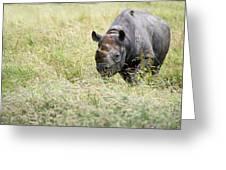 Black rhinoceros diceros bicornis michaeli in captivity Greeting Card by Matthew Gibson
