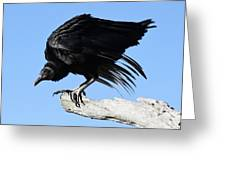 Black Vulture Greeting Card by Paulette Thomas