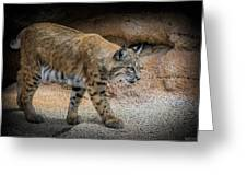 Bobcat Greeting Card by Elaine Malott