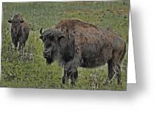 Buffalo Painterly Greeting Card by Ernie Echols