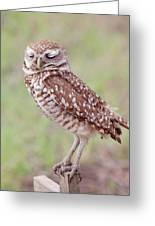 Burrowing Owl Greeting Card by Kim Hojnacki