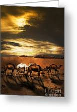 Camels Greeting Card by Jelena Jovanovic