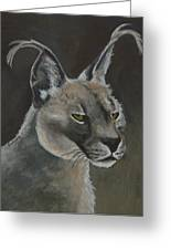 Caracal Cat Greeting Card by Margaret Saheed