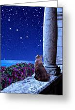 Cassiopeia Greeting Card by Kathleen Horner