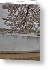 Cherry Blossoms - Washington Dc - 011336 Greeting Card by DC Photographer
