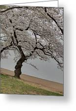 Cherry Blossoms - Washington Dc - 011343 Greeting Card by DC Photographer