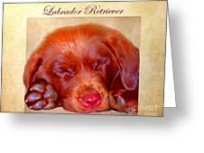 Chocolate Labrador Puppy Greeting Card by Iain McDonald
