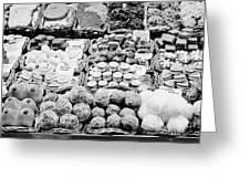 chocolates on display inside the la boqueria market in Barcelona Catalonia Spain Greeting Card by Joe Fox