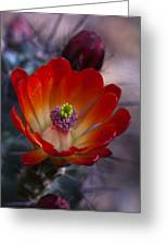 Claret Cup Cactus Greeting Card by Saija  Lehtonen