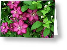 Clematis Greeting Card by Penny Lisowski