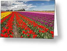 Colorful Field Of Tulips Greeting Card by Pierre Leclerc Photography