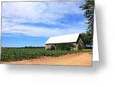 Corn Rows Greeting Card by Sheryl Burns