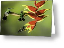 Costa Rican Hummingbirds Greeting Card by Myer Bornstein