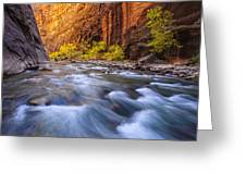 Cottonwood Row Greeting Card by Joseph Rossbach