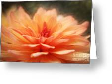 Dahlia Blooming Greeting Card by LHJB Photography